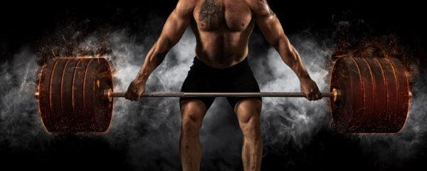 Programme de musculation